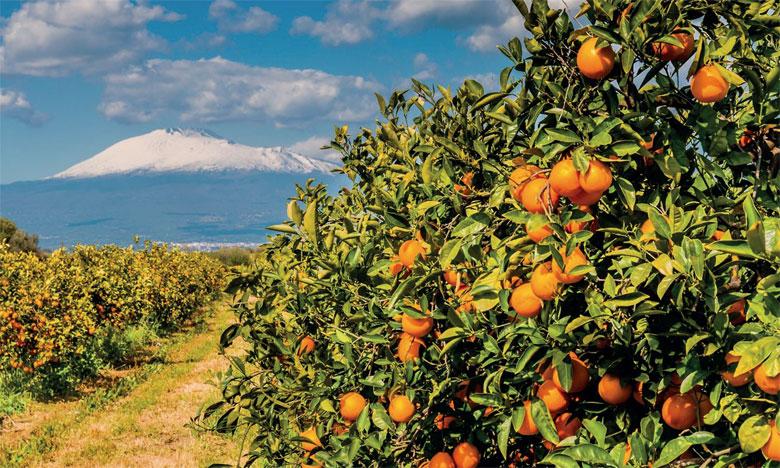 L'agrumiculture, une filière en pleine expansion dans la région