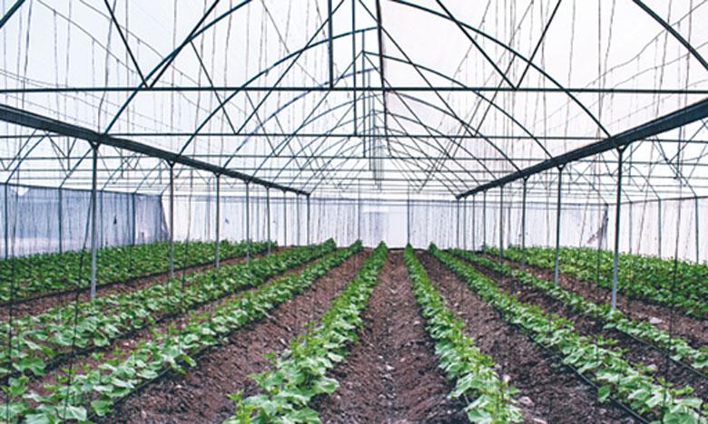 Le projet profitera à des investisseurs agricoles, notamment pour la culture maraîchère sous-serre dédiée à l'export ainsi qu'aux jeunes entrepreneurs, avec à la clé la création de 10.000 emplois permanents, essentiellement de la région Dakhla-Oued Eddahab.