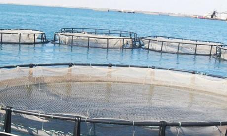L'étude de faisabilité d'une ferme pilote  en offshore attribuée