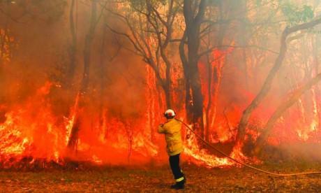Les feux de forêt d'Australie responsables de 20% de l'augmentation attendue en 2020