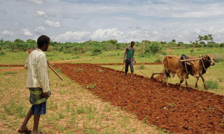 SOWIT recueille des données sur les cultures avec des images satellites et des drones pour les analyser  et produire ensuite des prévisions et des recommandations pour une meilleure gestion agricole.
