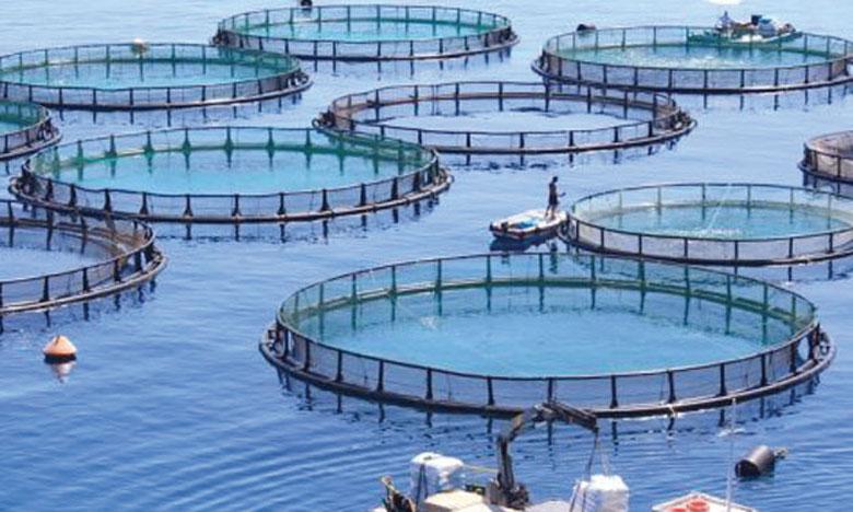 L'ANDA accompagne une vingtaine de projets aquacoles dont la capacité de production dépasse les 3.000 tonnes.