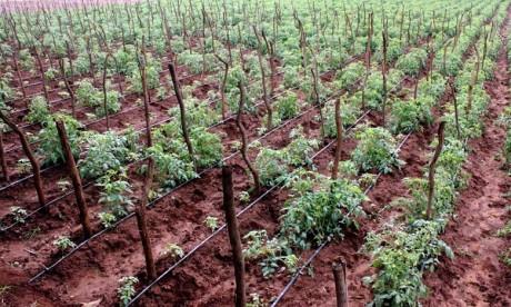 L'essentiel du programme d'économie d'eau dans le domaine agricole