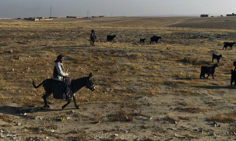 «La plupart des gens n'ont pas les moyens d'acheter de la nourriture pour leurs bêtes. Beaucoup d'animaux meurent  dans les montagnes et dans le désert», témoigne un éleveur.      Ph. AFP
