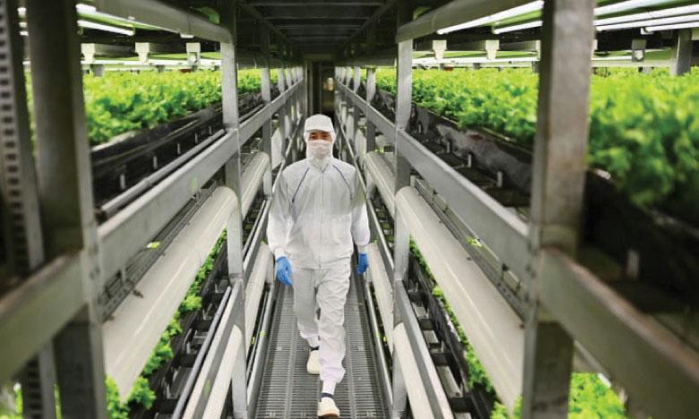Des usines à légumes en ville pour remplacer  la campagne