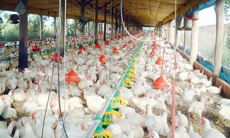 Face à la crise, les producteurs de volailles lancent un appel de détresse