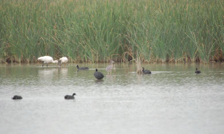 La pollution de la nappe, qui crée des conditions favorables à la pullulation de micro-organismes  pathogènes, est l'une des menaces qui pèsent sur les zones humides.