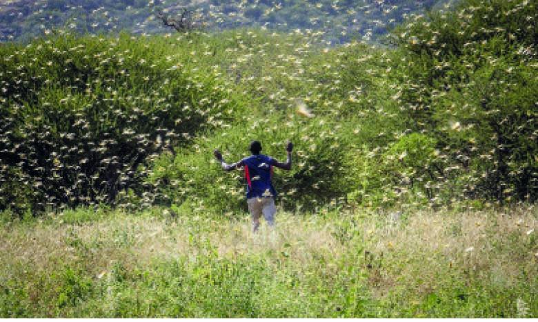 L'Afrique de l'Est subit la pire  infestation depuis des décennies