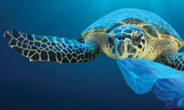 Le PNUD lance «Ocean Innovation  Challenge», un nouveau mécanisme  de financement