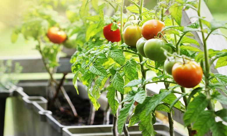 Des prix pour récompenser  les solutions alimentaires durables