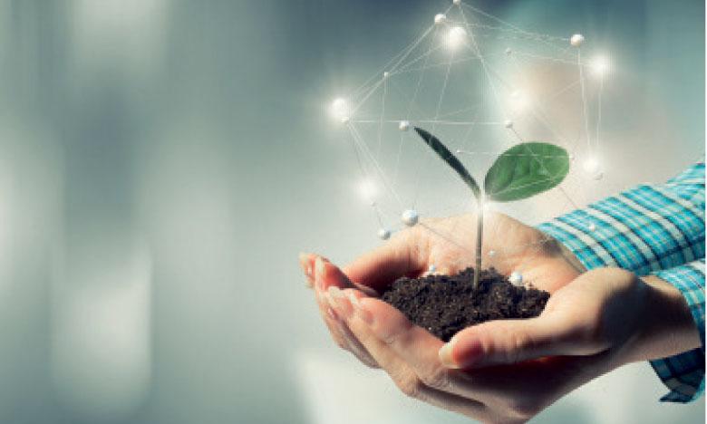 L'écosystème de l'accompagnement au service des porteurs de projets