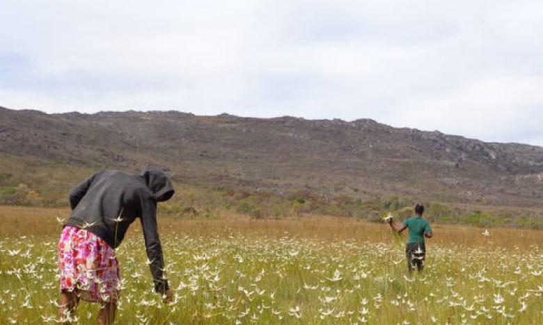Un système agricole traditionnel inscrit au patrimoine agricole mondial