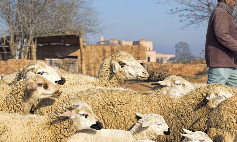 Alimentation du cheptel: Un programme d'appui aux éleveurs déployé dès vendredi