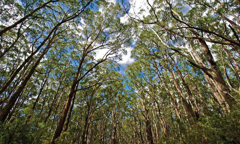 Les forêts séquestrent moins de CO2