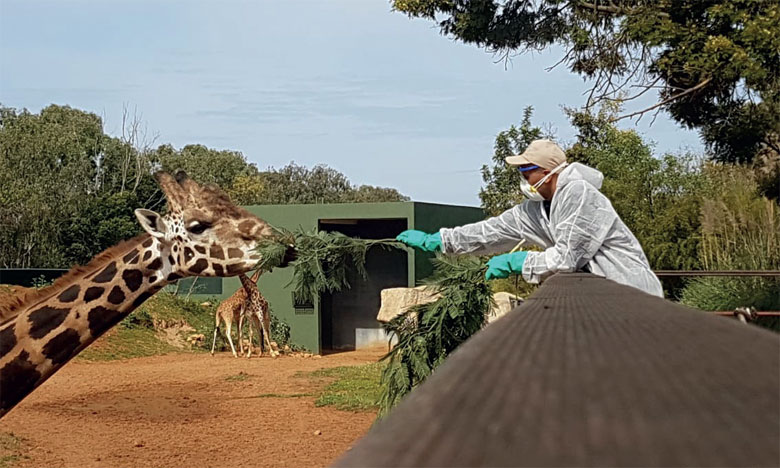 L'état d'urgence, un vrai coup de massue pour les parcs zoologiques