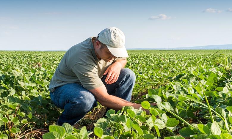 AFD-Crédit Agricole Maroc: Une subvention de 16,8 millions de DH pour encourager une agriculture durable