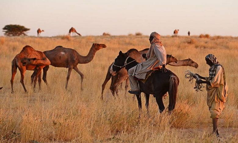 Avec la fermeture des frontières, les bergers nomades ne sont plus en mesure de se déplacer pour trouver du fourrage et de l'eau ni pour faire du commerce. Ph. FAO
