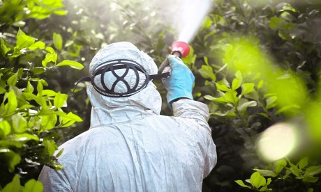 Pesticides: Vers l'interdiction du Chlorpyriphos au Maroc ?