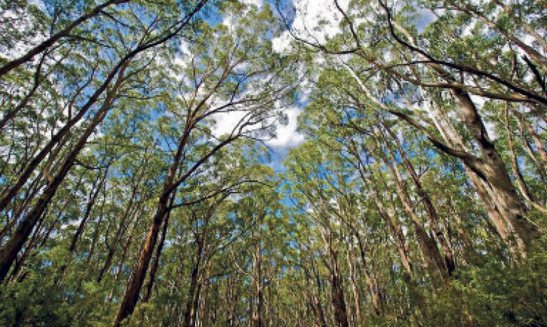 Environ 30% de la surface des forêts à travers le monde est utilisée pour produire des produits ligneux et non-ligneux. Ph. DR