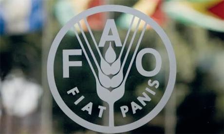 La FAO et le FEM soutiennent des projets au Maroc