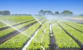 Irrigation : Un projet d'aménagement hydro-agricole sur 1.000 ha à Chichaoua