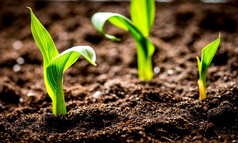 Initiative FEM-FAO pour l'agriculture durable : le Maroc parmi 30 pays bénéficiaires