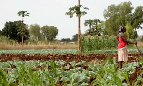 Antonio Guterres met en garde contre une crise alimentaire mondiale aggravée par le Covid-19