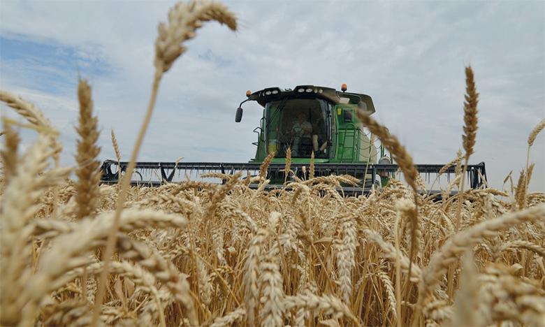 La tendance vers la baisse des prix du blé en juin est en partie due à de meilleures perspectives de production dans de nombreux pays exportateurs. Ph. AFP