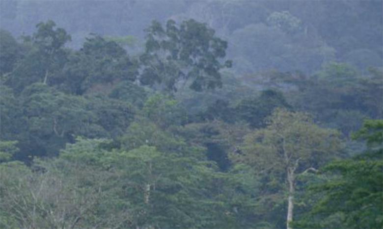 Le volume du bois du tronc et des branches est plus élevé dans les forêts d'Amérique du Sud et centrale et en Afrique occidentale et centrale. Ph. AFP