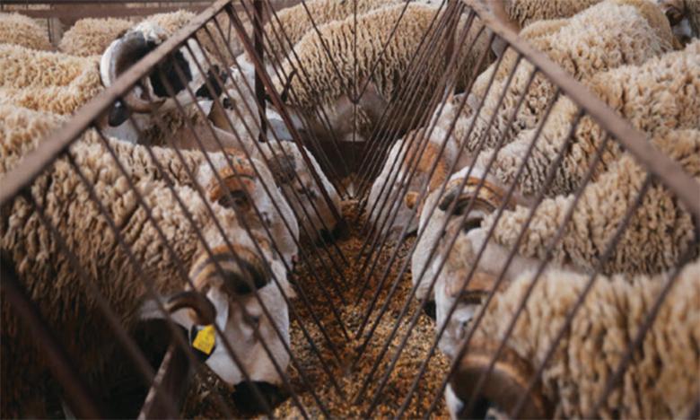 Le marché à bestiaux accueille ses premiers clients