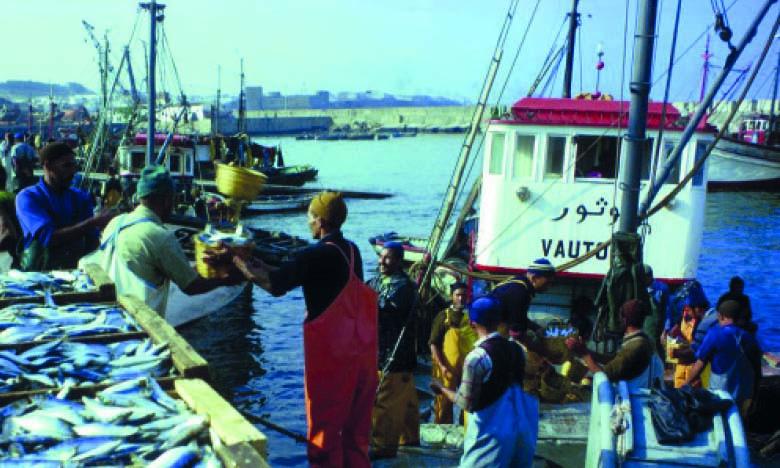 Les débarquements de la pêche  artisanale et côtière en baisse  de 11%
