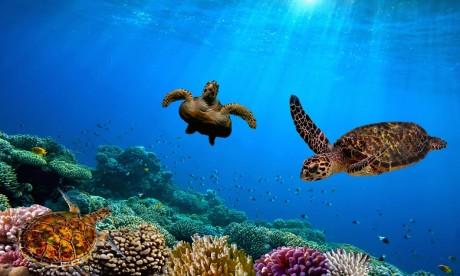 Trente nouvelles espèces marines découvertes aux Galapagos