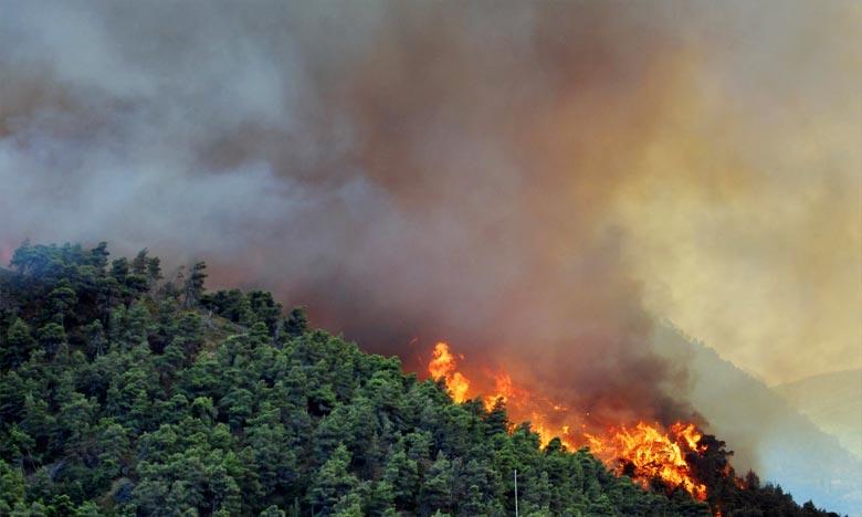 M'diq-Fnideq: Les efforts se poursuivent pour maîtriser un feu de forêt