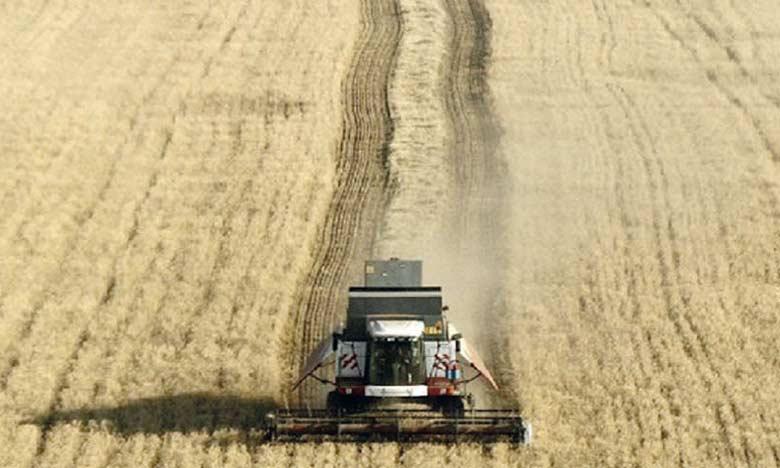 Les importations des céréales en hausse de 49,8% à fin juillet