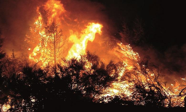 M'diq-Fnideq: Le feu de forêt maitrisé, plus de 1.020 ha ravagés