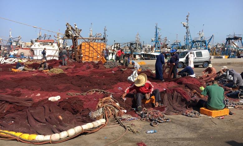 Plus de 70 navires de pêche au poulpe ont entamé leurs activités, tandis que les examens médicaux nécessaires ont été effectués. Ph : DR