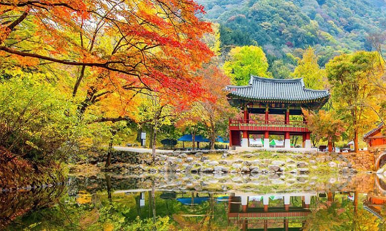 La culture coréenne  à l'honneur