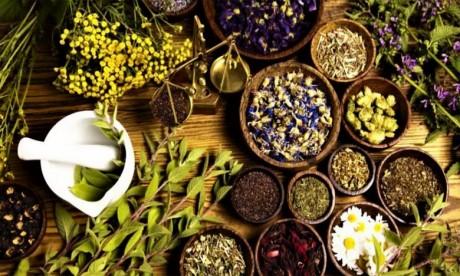 Covid-19: L'OMS encourage la recherche africaine sur les médecines naturelles