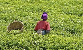Développement agricole en Afrique: L'OCP et l'IFC scellent un partenariat
