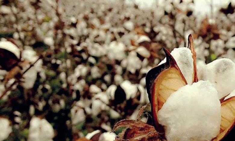 Les industriels du textile craignent la raréfaction des matières premières comme le coton. Ph. DR
