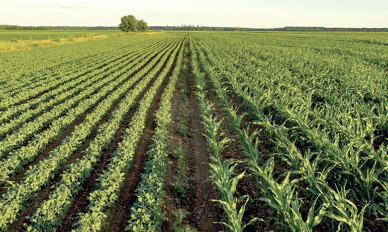 Un projet de carte agricole pour le Souss-Massa