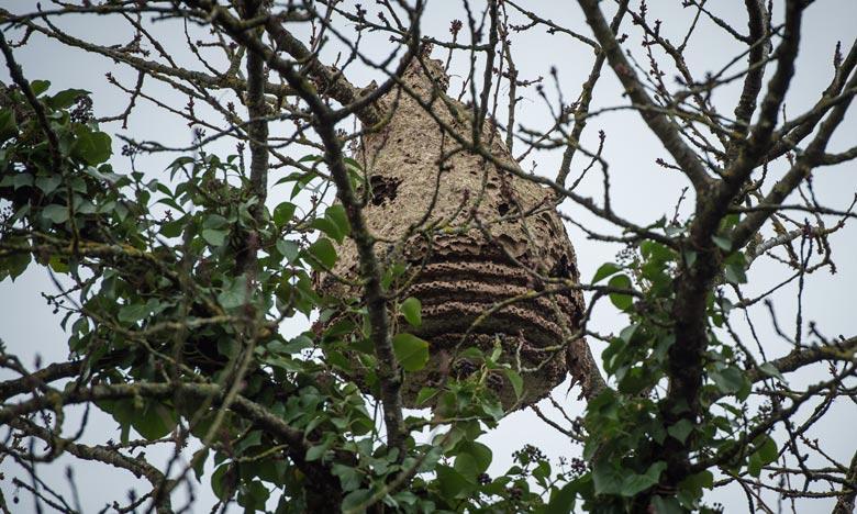 Le nid a été localisé sur une propriété privée de Blaine, dans l'Etat de Washington dans le nord-ouest, proche de la frontière avec le Canada. Ph : AFP