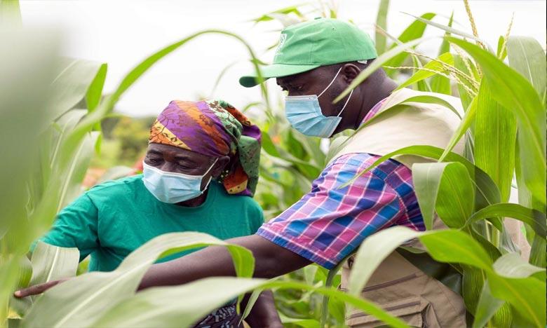 La BAD se réjouit de s'associer à OCP Africa dans le but d'atteindre l'objectif d'augmentation de la productivité agricole inclus dans la stratégie de la Banque, «Nourrir l'Afrique». Ph : DR