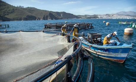 Provinces du Sud : Des opérateurs économiques français explorent le potentiel halieutique de la région