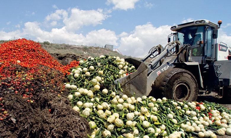 La réduction de 25% de gaspillage alimentaire permettrait de réduire de 27% la surface des terres arables actuellement exploitées.Ph. DR