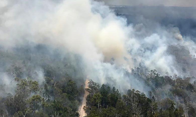 L'Île Fraser en Australie ravagée par les feux de forêt