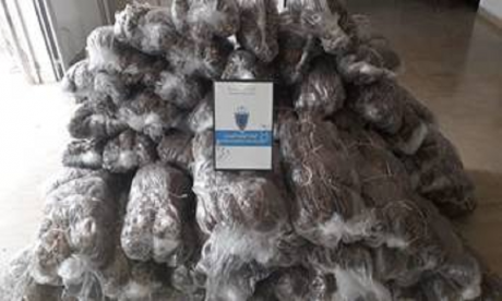 Saisie de plus de 1,5 tonne de kif et de tabac