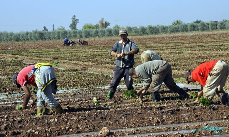 Dernières précipitations: L'espoir renaît chez les agriculteurs de Khénifra