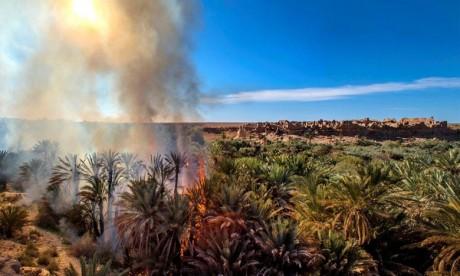 Guelmim: un incendie ravage plusieurs palmiers dans l'oasis de Tagmout
