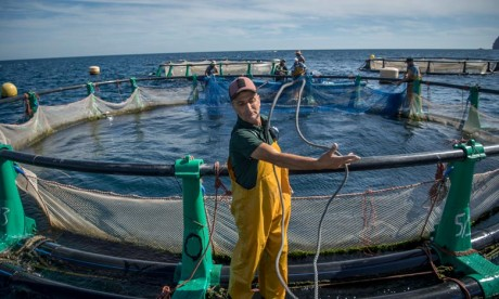 Aquaculture  :  Souss-Massa prête à lancer ses 24 projets